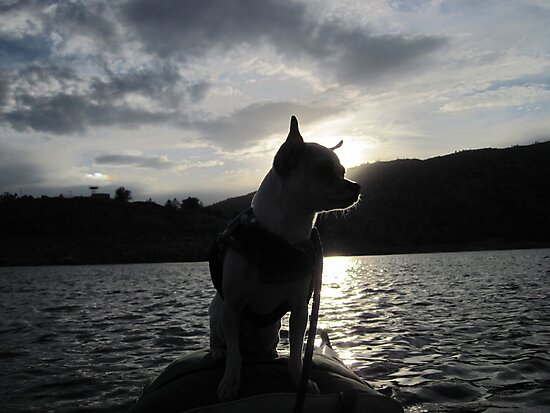 Chihuahua and the Sunset Kayak Trip by Corri Gryting Gutzman