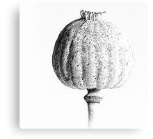 Poppy Head 01 Canvas Print