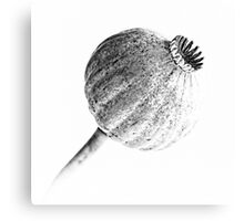 Poppy Head 02 Canvas Print
