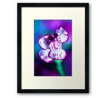 Colour Of Life XII [Print & iPad Case] Framed Print