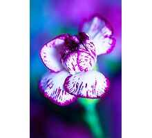 Colour Of Life XII [Print & iPad Case] Photographic Print