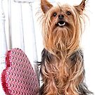 Yorkshire Terrier with a Big Heart by susan stone