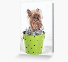 Yorkshire Terrier with a bad Hair Day Greeting Card