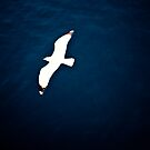 Seabird by alecska