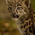 Snow Leopard Cub by Karl Thompson