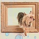 Yorkshire Terrier Steps out of the Frame by susan stone