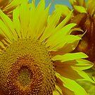Sunflowers by Cathy  Walker