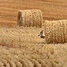 Peek-a-boo springbok by Erika Gouws