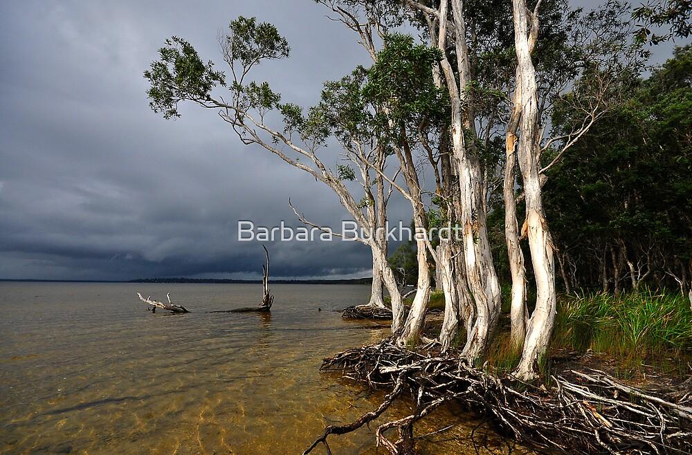 Approaching Storm by Barbara Burkhardt