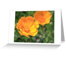 Fill me up, Buttercup!  Greeting Card