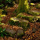 Woodland Steps by Brian Kerr