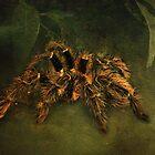 Tarantula by Carol Bleasdale
