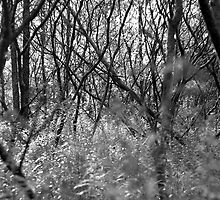 Forest Cacophony by Geoff Dodd