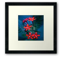 Colour Of Life XXX Framed Print