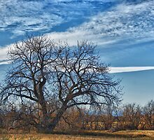 Old Cottonwood Tree by Merja Waters