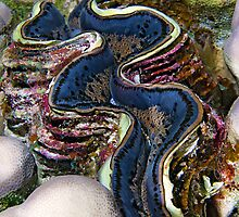 Giant Clam by Henry Jager