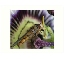 Hoverfly and passion fruit Art Print