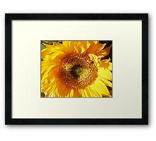 Sunny Flower Framed Print