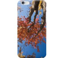 Looking Up (iPhone/iPod Case) iPhone Case/Skin