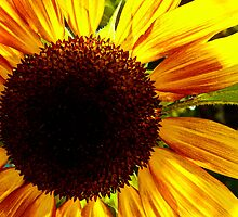 The Sunflower is a Woman by LadyEloise