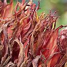 Autumn in the dahlia garden by Celeste Mookherjee