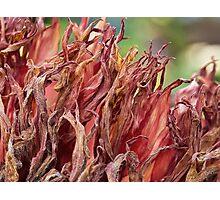Autumn in the dahlia garden Photographic Print