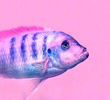 Fish :) by ulryka