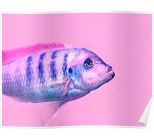 Fish :) Poster
