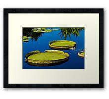 Lily pads at Denver Botanic Gardens Framed Print