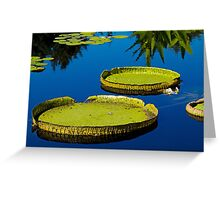 Lily pads at Denver Botanic Gardens Greeting Card