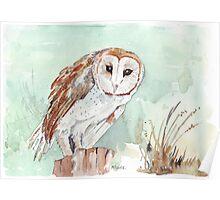 Barn Owl/Nonnetjie-Uil Poster