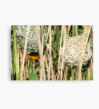 Is this to your liking? Canvas Print
