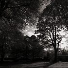 Autumn Landscape Bute Park Cardiff by Artberry