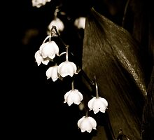 little bells by Jessica Karran