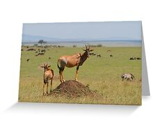 Topi Lookout Greeting Card