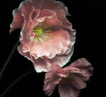 Pink Poppies by EbyArts