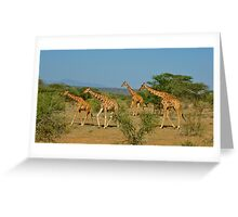 Reticulated Giraffes Greeting Card