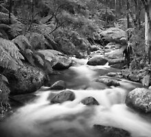Tooronga River by Christine  Wilson Photography