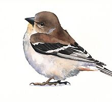 Bird Goldfinch watercolor by Louise De Masi