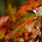 Oak Leaves in the Fall by Mattie Bryant