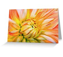 Orange dahlia. Greeting Card
