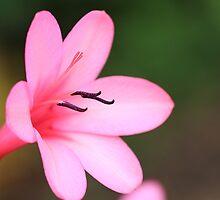 """Pretty in Pink"" by jonxiv"