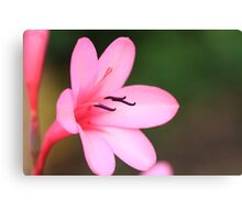 """""""Pretty in Pink"""" Canvas Print"""