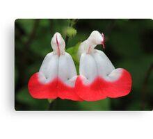 """Garden Bells"" Canvas Print"