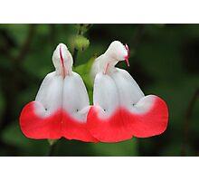 """""""Garden Bells"""" Photographic Print"""