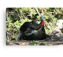 Gould's Wild Turkey ~ Male Canvas Print