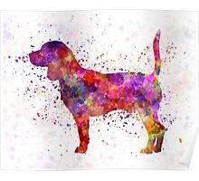 Beagle in watercolor Poster