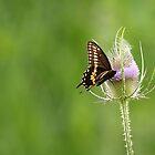 Bee & Butterfly by Alinka