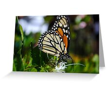 Monarch Day Greeting Card
