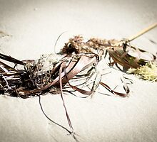 Washed Ashore by Sally Werner